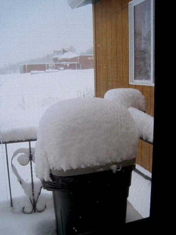 SNOW May DEB Cans (s)