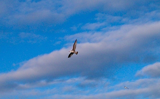 Fox River GOOSE Flying