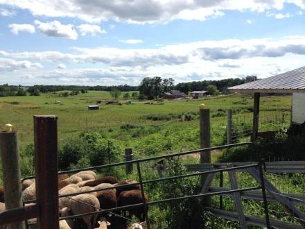 SHEEP FARM 02