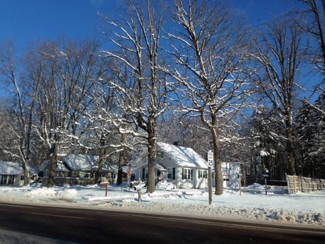 Skeletal SNOW Trees