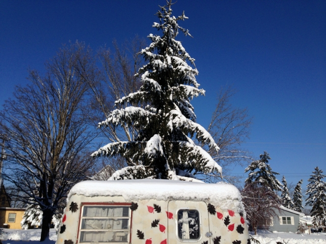 Snow On Trees LD