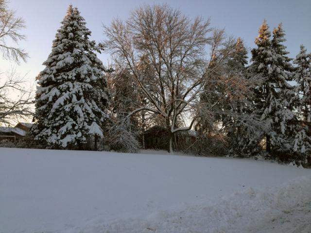 Snow On Trees SM 01