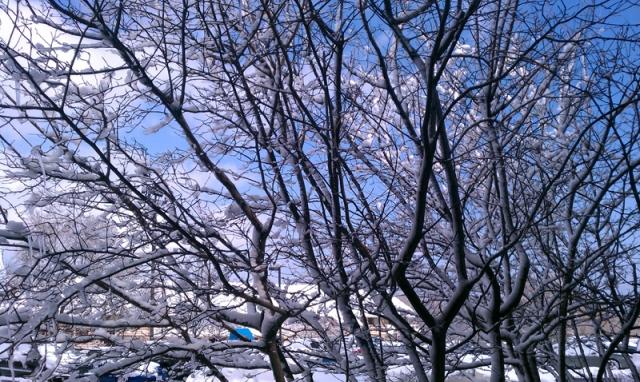 Wisco Snow 01